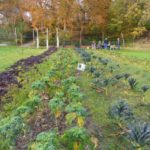 Maandag 12 november boerenkoollasagne en mandarijnenbavarois